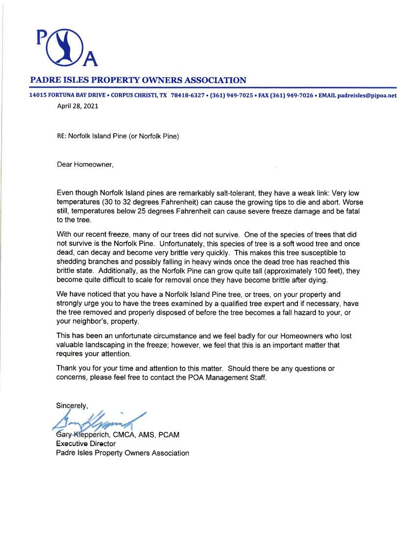 Norfolk Island Pine letter